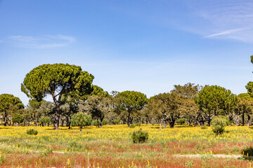 cork trees in the Algarve region