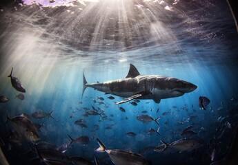 A shark in Australia.