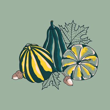 Autumn Pumpkins Squash Vector Illustration Design.