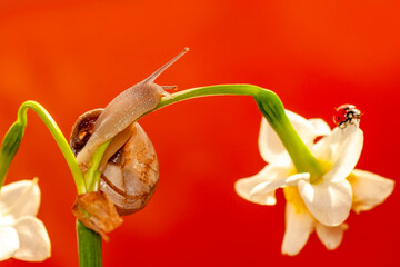 Photo sur Plexiglas Papillon Close up beautiful Snail in the garden