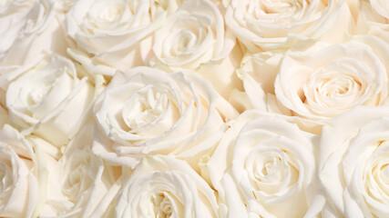 close-up of white pastel rose