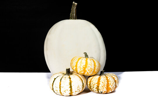 a large white pumpkin and several small decorative white pumpkins on a black background