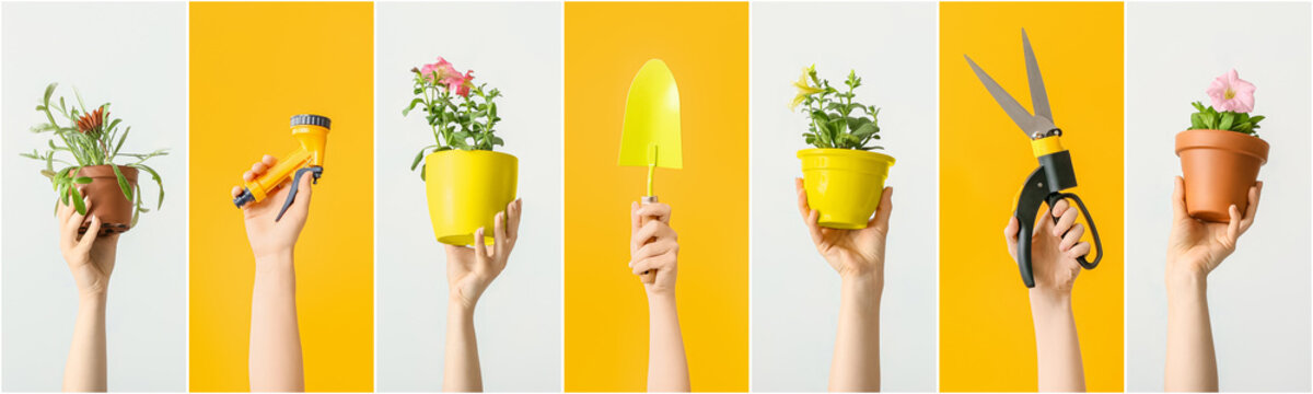 Female hands with gardening tools and houseplants on color background