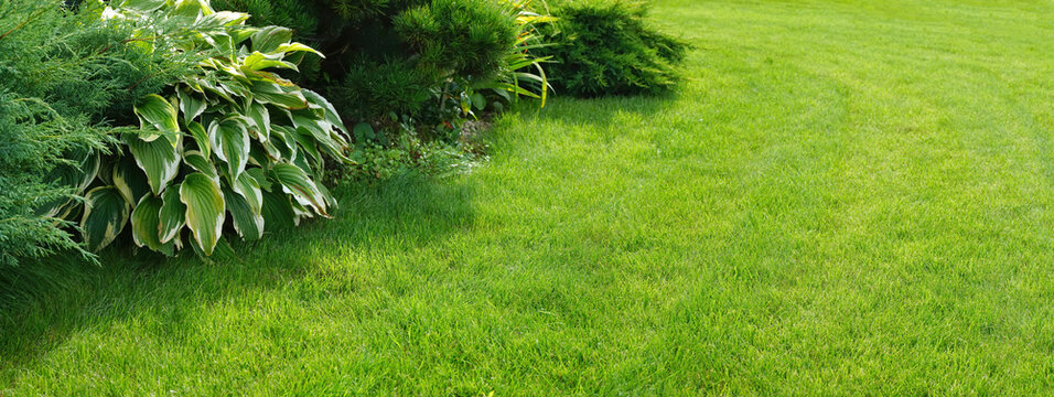 Beautiful manicured lawn and flowerbed with deciduous shrubs on plot or Park outdoor. Green lawn closely mowed as grass background.
