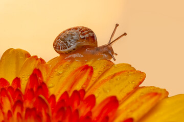 Close up beautiful Snail in the garden