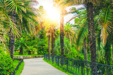 Walking path and alley of different palms in a tropical Mediterranean park.
