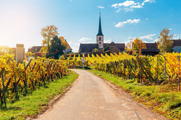 Landscape with autumn vineyards in region Alsace, France near village of Mittelbergheim