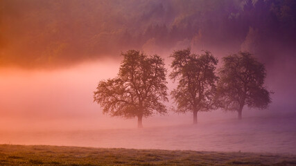 Beautiful scenery of a landscape with trees covered with fog at sunset