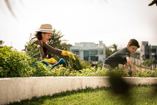 Jardinagem ensinado pelos avós