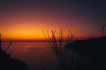 Plant silhouetted against the blurred fiery sky at sunset in Zakynthos island, Greece