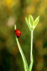 Fond de hotte en verre imprimé Papillon Beautiful ladybug on leaf defocused background