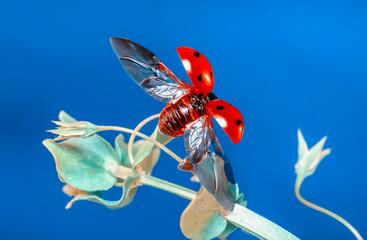 Photo sur Plexiglas Papillon Beautiful ladybug on leaf defocused background