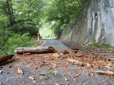 豪雨と長雨の影響での倒木