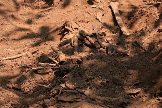Remains of an unidentified person are seen at a 1972 mass grave as workers from the Truth and Reconciliation Commission dig to extract bodies in the Gikuzi village, Makamba Province