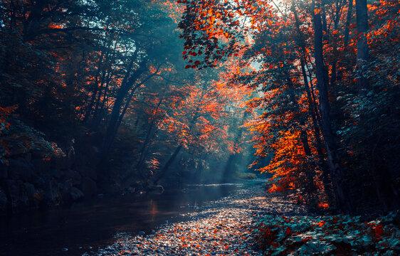 sun rays in autumn forest