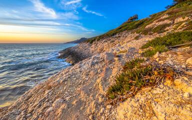 Wall Mural - Coastal vegetation Cap Corse