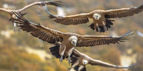 Griffon vultures flying in mist