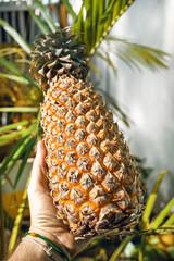 Ananas, owoc tropikalny na jasnym tle.