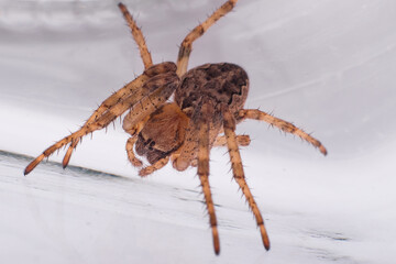 Spider in a glass jar, macro photography