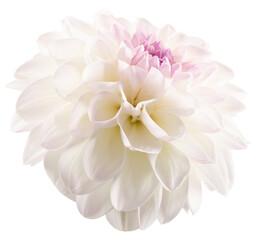 Photo sur Plexiglas Dahlia white dahlia isolated on a white background