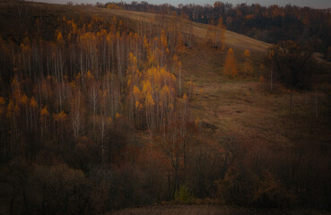 Printed roller blinds Gray traffic autumn in the forest