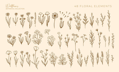 Obraz Wildflowers outline hand drawn set. Flower doodle botanical collection. Herbal and meadow plants, grass. Isolated vector illustration. - fototapety do salonu