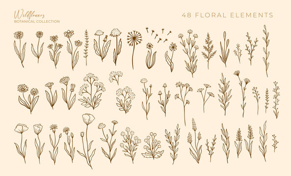 Wildflowers outline hand drawn set. Flower doodle botanical collection. Herbal and meadow plants, grass. Isolated vector illustration.