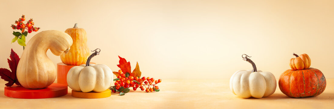 Modern still life with different sort of pumpkins, berries and leaves on colorful podiums. Autumn concept with food and geometric objects on pastel background with copy space.