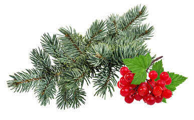 Fir tree and viburnum isolated on white background