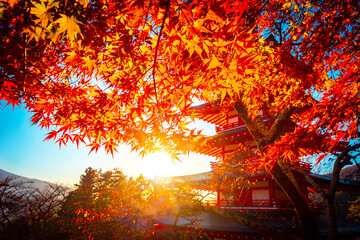 Golden autumn in Japan. The sun shines through the leaves of Japanese maples. Red-leaved trees and a pagoda. Japanese natural landscape with pagoda. Five lakes of Kawaguchiko.Travel to Asian countries