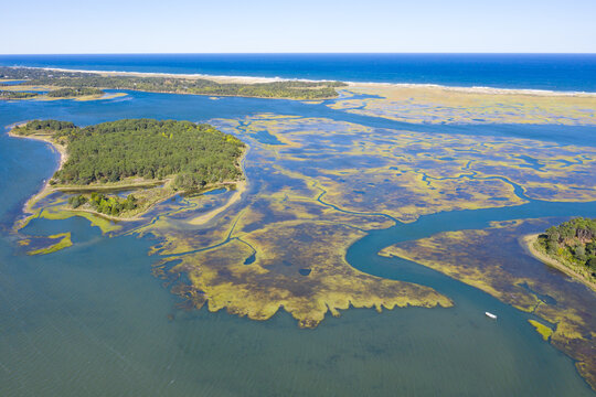 Salt marshes and estuaries are found throughout Cape Cod, Massachusetts. They provide calm nesting, feeding and breeding habitat for a variety of birds, fish, and marine invertebrates.