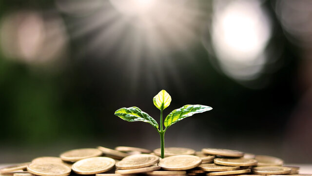 Plant a tree on coin pile with business ideas for finance, saving and economic growth.
