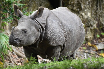 this is a baby rhino