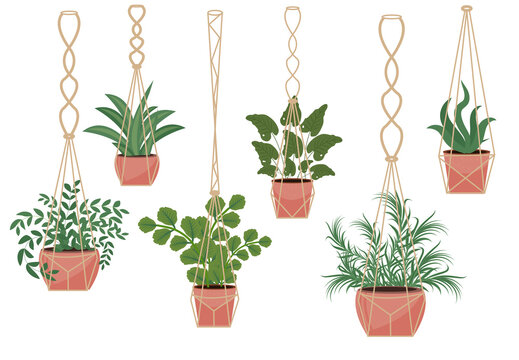 Flowers in a pot macrame pots, modern Scandinavian style, interior decor. Hanging plants set. Vector illustration