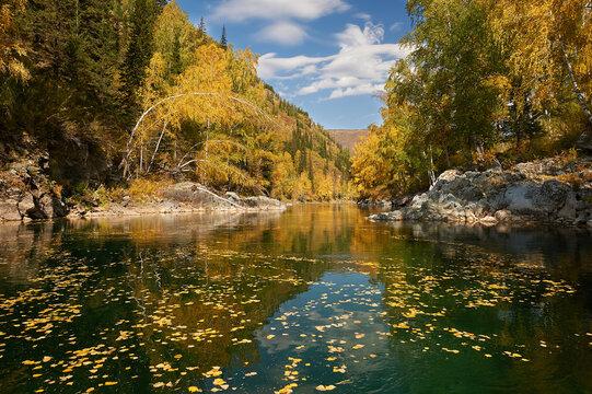 Kumir River flowing through the autumn Altai Mountains.