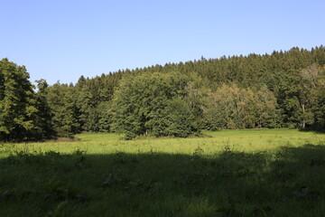 Wälder Wiesen Felder Bäume Natur Umwelt Naturschutz