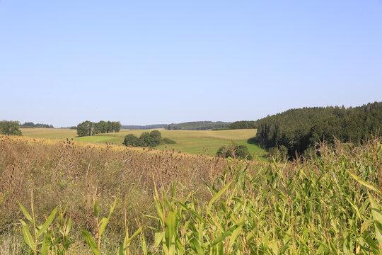 Wiese Wald und Feld Natur Umwelt Wanderung
