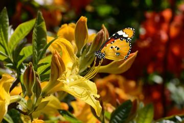 Schmetterling 713