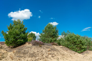 Shifting sand dune at former military training area Jueterbog