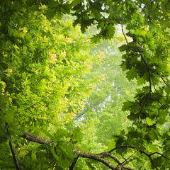 Beautiful view of green wild forest in nature