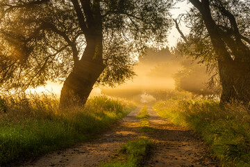 dirt road in the morning mist