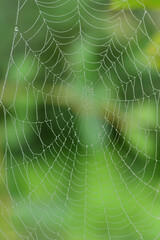 Close-up of a spider web with water droplets in vertical format, against a green background