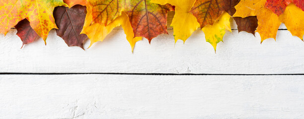 Composition of colourful autumn leaves on white wooden background. Fall concept. Banner