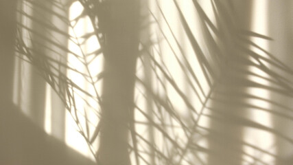 Morning sun lighting the room, shadow background overlays. Transparent shadow of tropical leaves....
