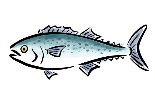 さわら サワラ 鰆 魚 筆 手描き