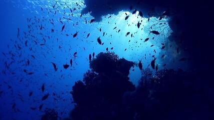 Wall Mural - Underwater school of fish over coral reef