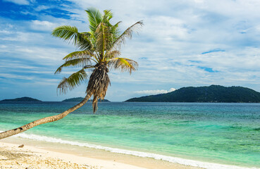 Coconut palm hanging over beach in Seychelles