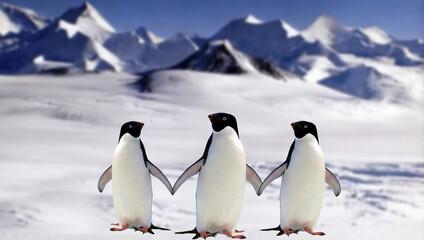 two penguins in polar regions