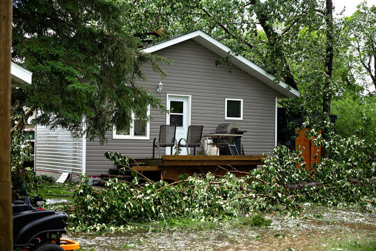 Back yard destruction from fallen trees and hail during a summer storm