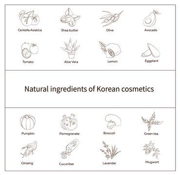 set of natural ingredients of Korean cosmetics, Centella, avocado, olive, green tea. eggplant, ginseng. broccoli, pumpkin, aloe, shea butter, lemon, pomegranate, mugwort, lavender